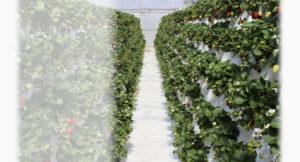 servizi per il giardino, Servizi per il giardino, scegli sempre la qualità